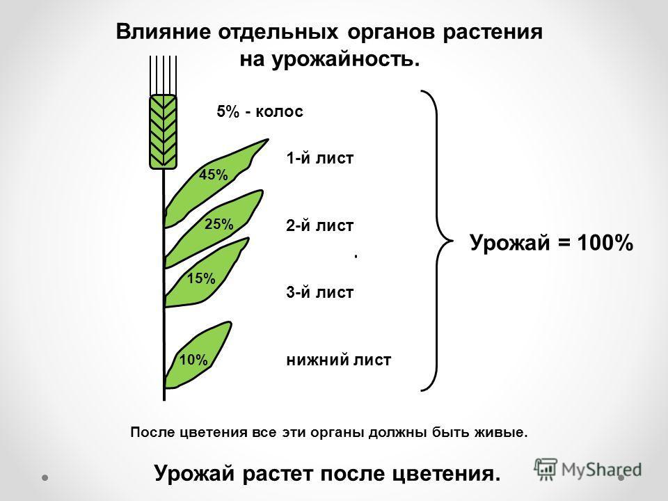 1-й лист 45% 25% 15% 10% 2-й лист 3-й лист нижний лист Урожай растет после цветения. После цветения все эти органы должны быть живые. 5% - колос Урожай = 100% Влияние отдельных органов растения на урожайность.