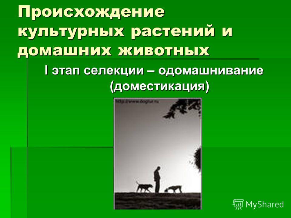 Происхождение культурных растений и домашних животных I этап селекции – одомашнивание (доместикация)