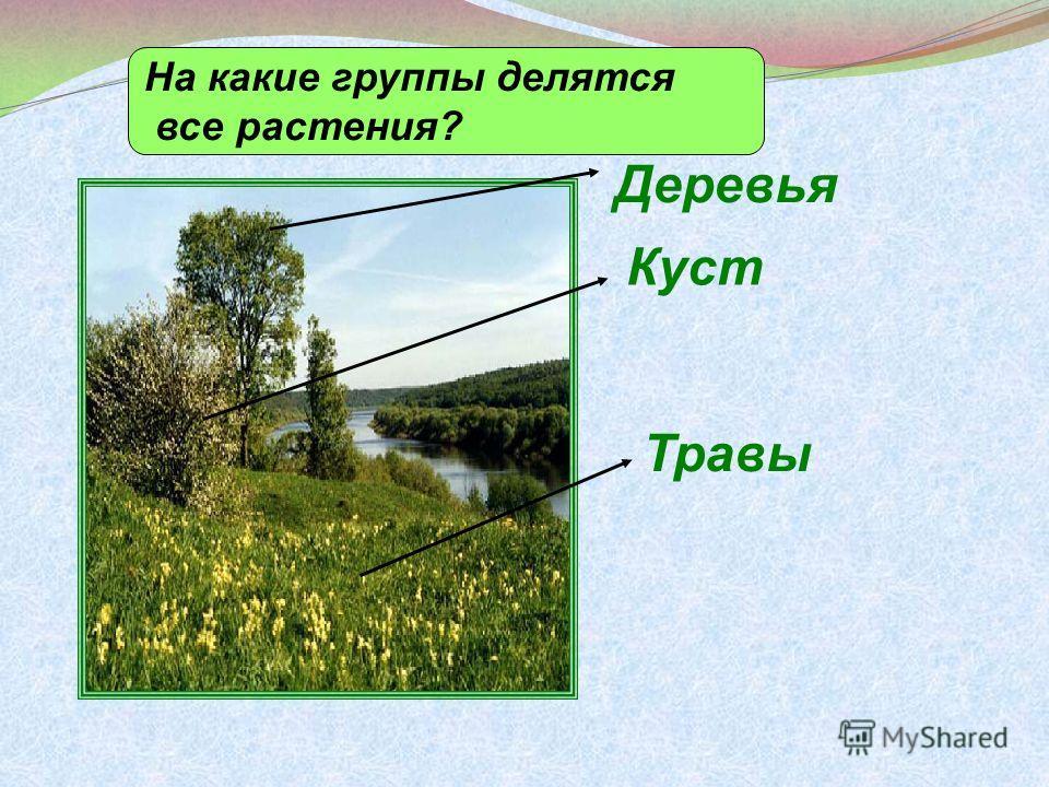 Деревья Куст Травы На какие группы делятся все растения?