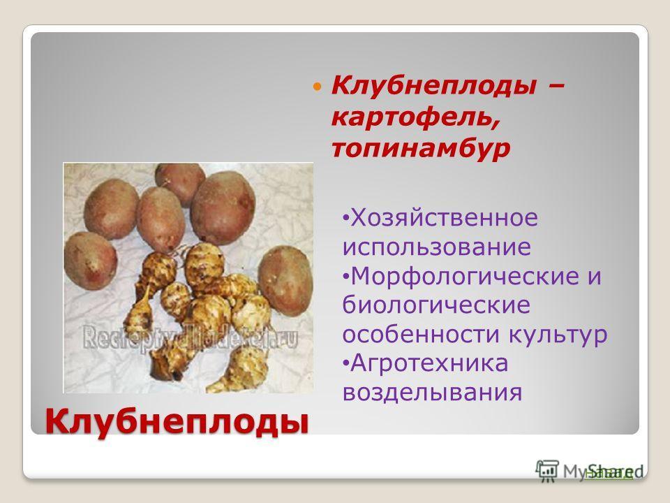 Клубнеплоды Клубнеплоды – картофель, топинамбур Хозяйственное использование Морфологические и биологические особенности культур Агротехника возделывания назад