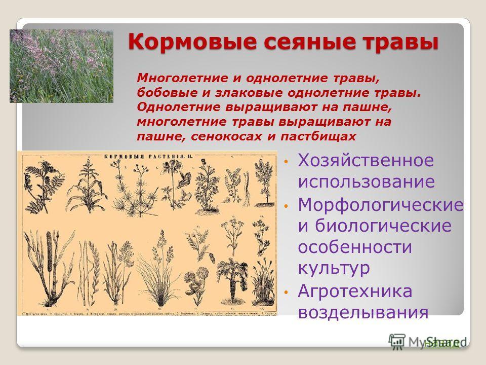 Кормовые сеяные травы Хозяйственное использование Морфологические и биологические особенности культур Агротехника возделывания Многолетние и однолетние травы, бобовые и злаковые однолетние травы. Однолетние выращивают на пашне, многолетние травы выра