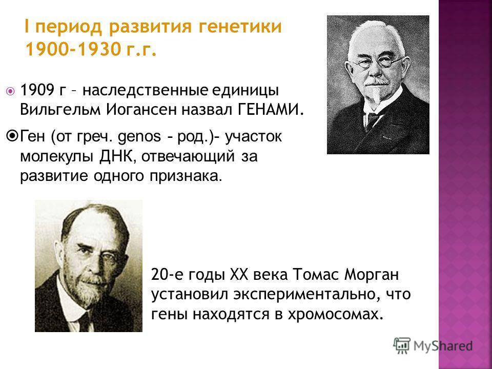 1909 г – наследственные единицы Вильгельм Иогансен назвал ГЕНАМИ. I период развития генетики 1900-1930 г.г. 20-е годы XX века Томас Морган установил экспериментально, что гены находятся в хромосомах. Ген (от греч. genos - род.)- участок молекулы ДНК,