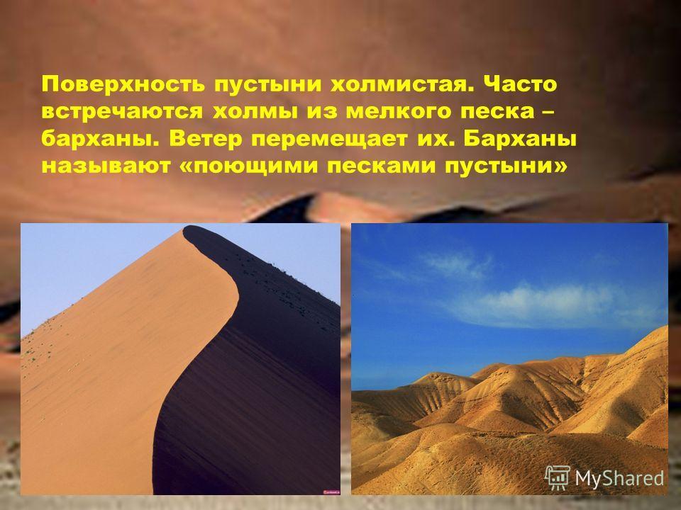 Поверхность пустыни холмистая. Часто встречаются холмы из мелкого песка – барханы. Ветер перемещает их. Барханы называют «поющими песками пустыни»