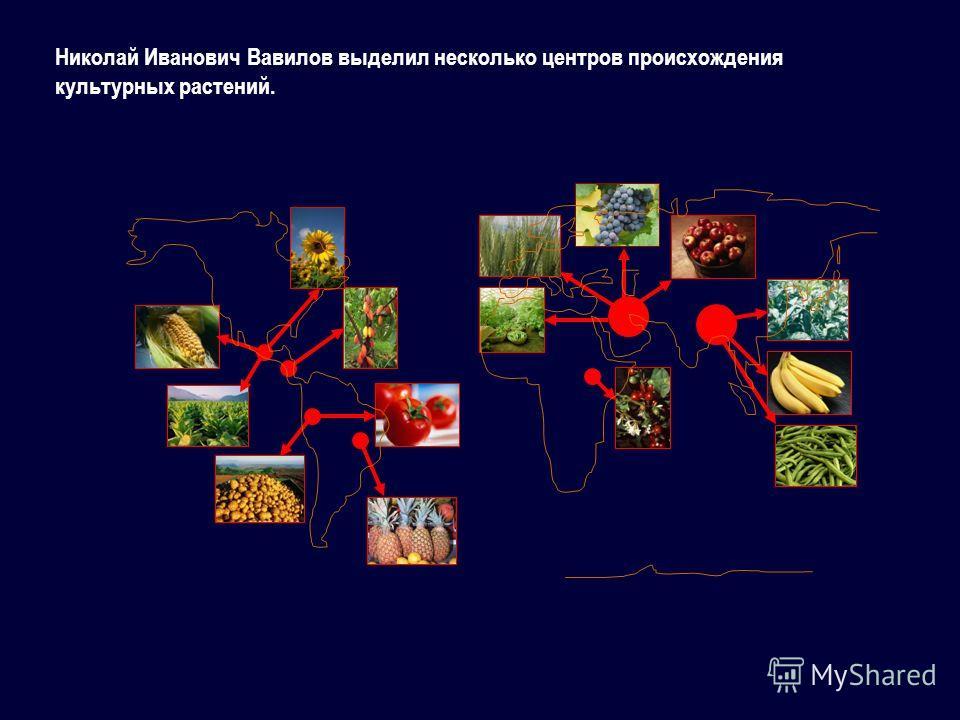 Николай Иванович Вавилов выделил несколько центров происхождения культурных растений.