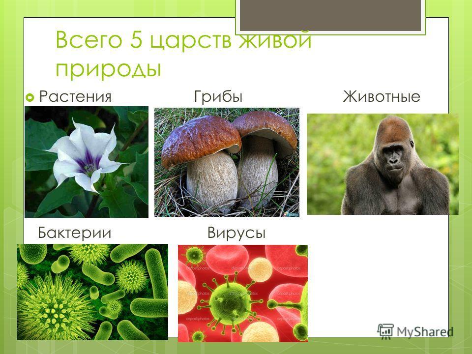 Всего 5 царств живой природы Растения Грибы Животные Бактерии Вирусы