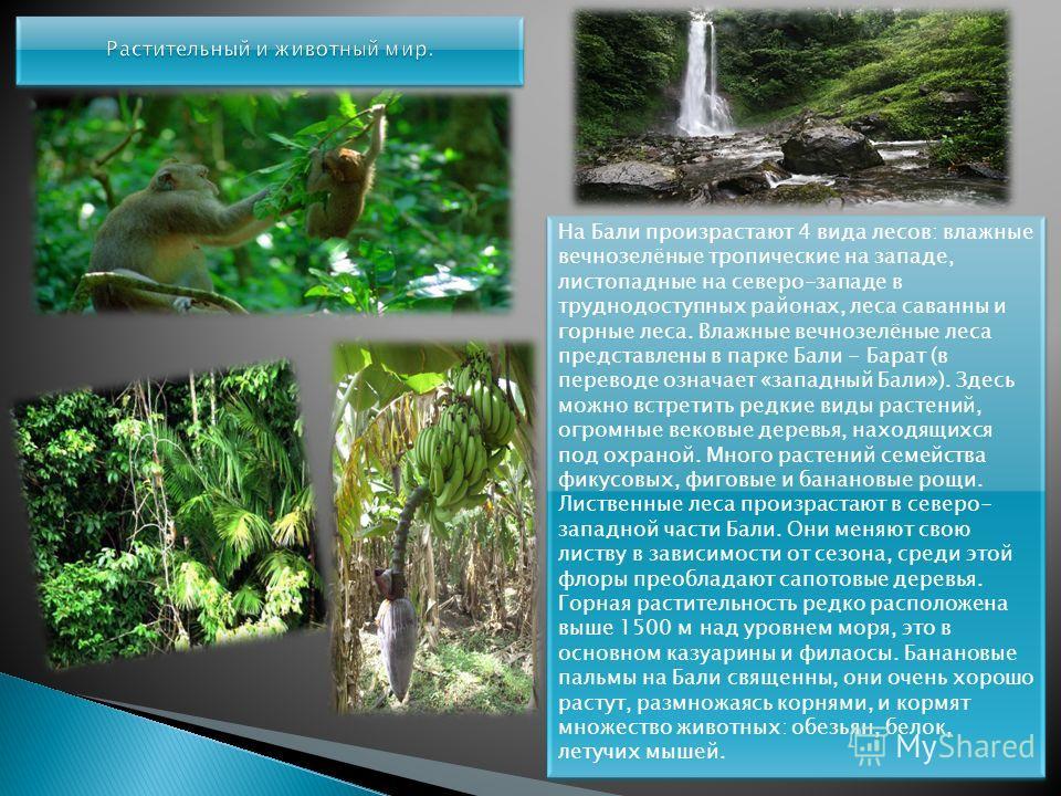 На Бали произрастают 4 вида лесов: влажные вечнозелёные тропические на западе, листопадные на северо-западе в труднодоступных районах, леса саванны и горные леса. Влажные вечнозелёные леса представлены в парке Бали - Барат (в переводе означает «запад
