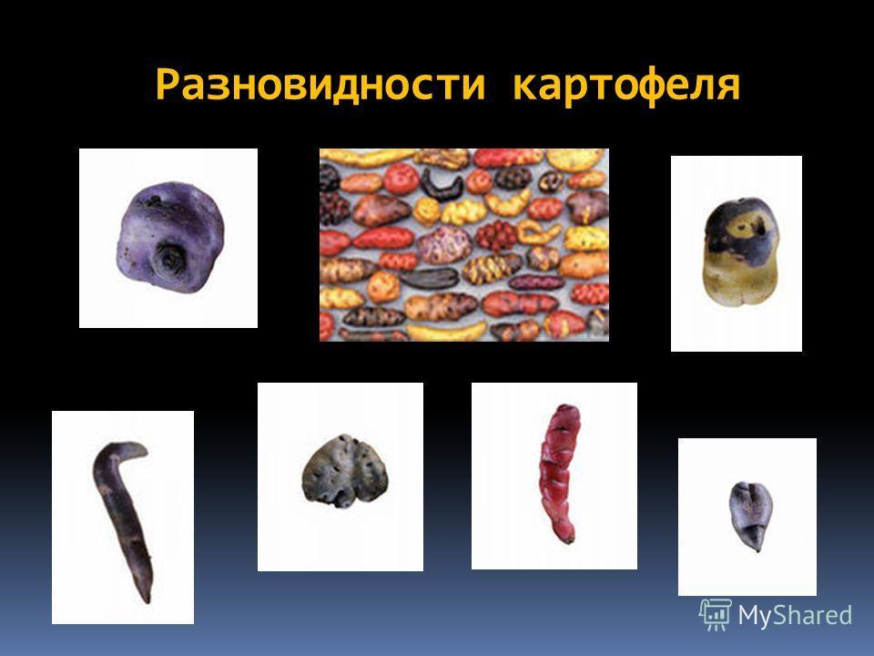 Разновидности картофеля