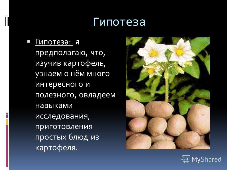 Гипотеза Гипотеза: я предполагаю, что, изучив картофель, узнаем о нём много интересного и полезного, овладеем навыками исследования, приготовления простых блюд из картофеля.