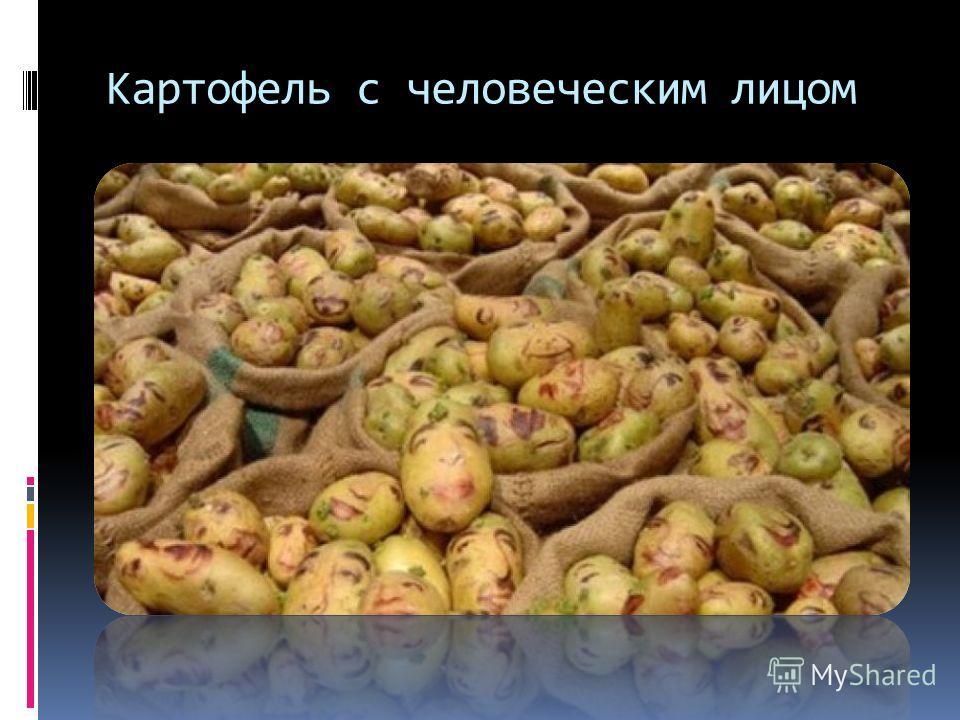 Картофель с человеческим лицом