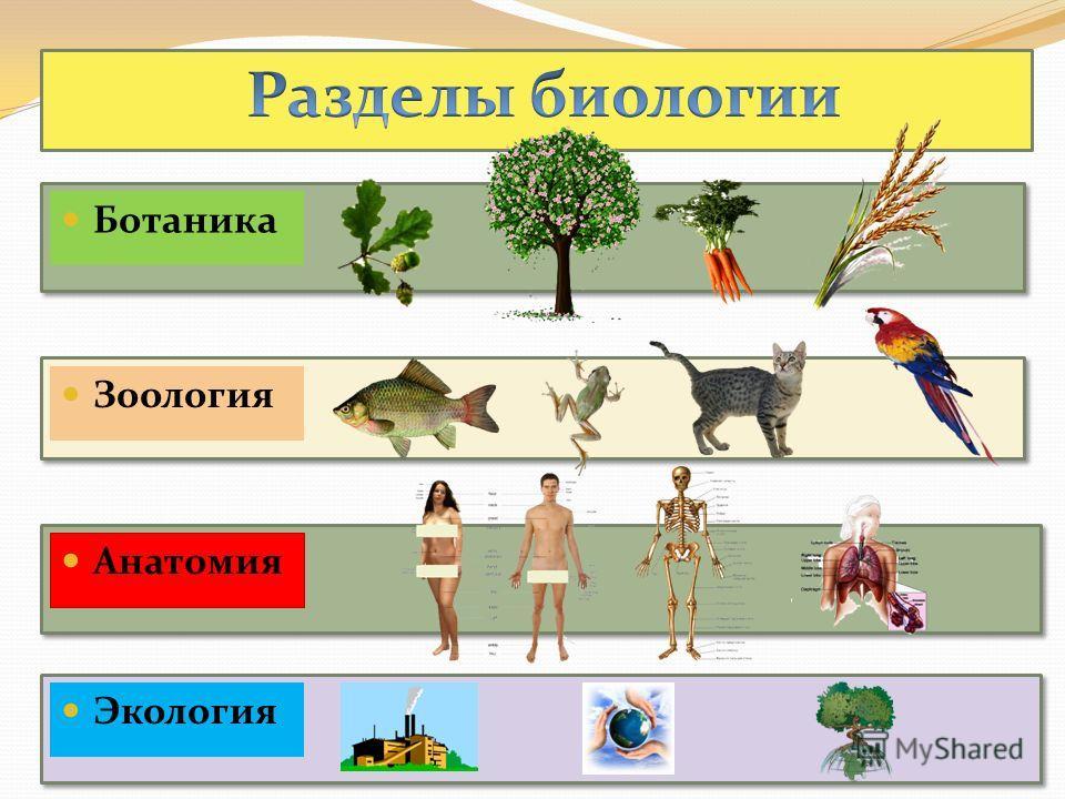 Ботаника Зоология Анатомия Экология