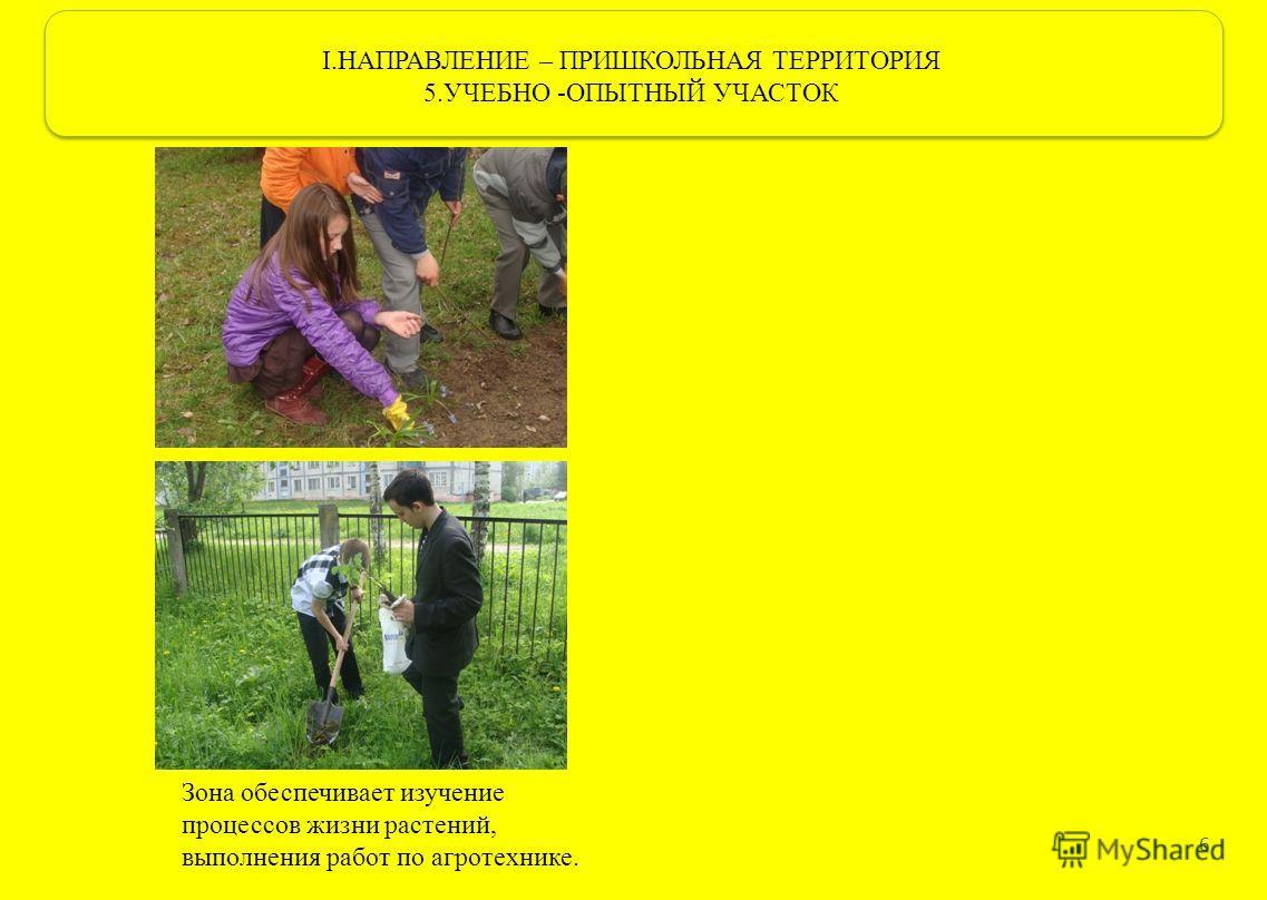 I.НАПРАВЛЕНИЕ – ПРИШКОЛЬНАЯ ТЕРРИТОРИЯ 5.УЧЕБНО -ОПЫТНЫЙ УЧАСТОК 6 Зона обеспечивает изучение процессов жизни растений, выполнения работ по агротехнике.