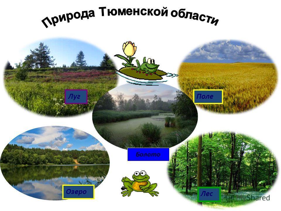 Луг Поле Озеро Лес Болото