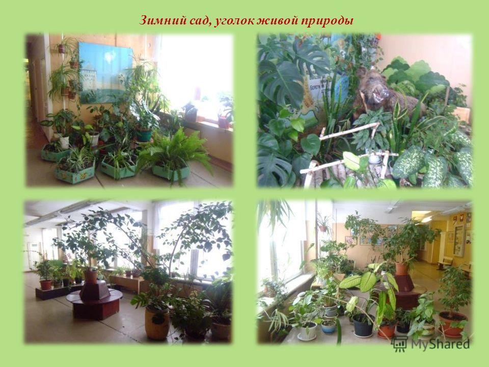 Зимний сад, уголок живой природы