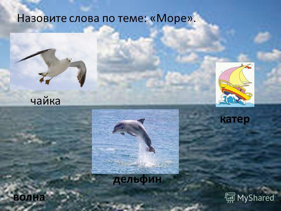 Назовите слова по теме: «Море». чайка катер волна дельфин