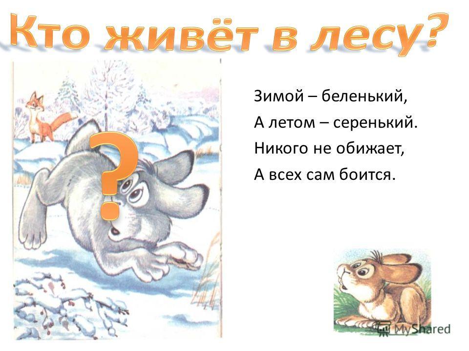 Зимой – беленький, А летом – серенький. Никого не обижает, А всех сам боится.