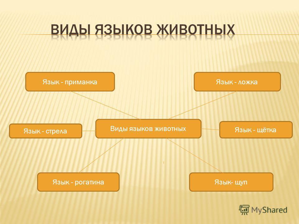 Виды языков животных Язык - приманка Язык - ложка Язык - рогатина Язык- щуп Язык - щётка Язык - стрела