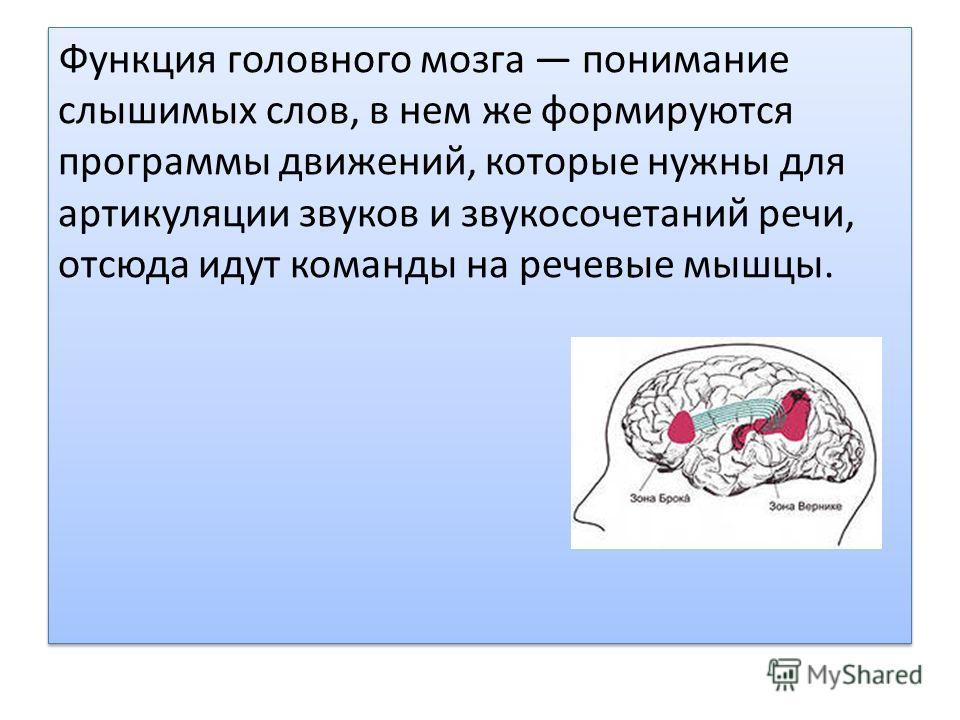 Функция головного мозга понимание слышимых слов, в нем же формируются программы движений, которые нужны для артикуляции звуков и звукосочетаний речи, отсюда идут команды на речевые мышцы.