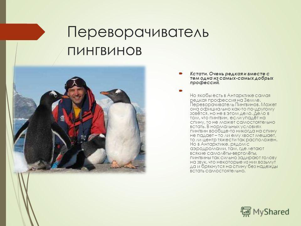 Переворачиватель пингвинов Кстати. Очень редкая и вместе с тем одна из самых-самых добрых профессий. Но якобы есть в Антарктике самая редкая профессия на Земле. Переворачиватель Пингвинов. Может она официально как-то по-другому зовётся, но не в этом