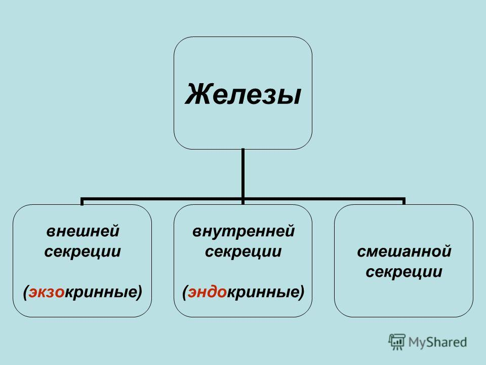 Железы внешней секреции (экзокринные) внутренней секреции (эндокринные) смешанной секреции