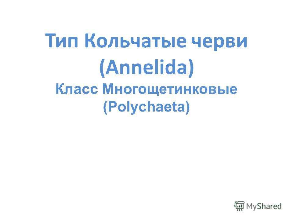 Тип Кольчатые черви (Annelida) Класс Многощетинковые (Polychaeta)