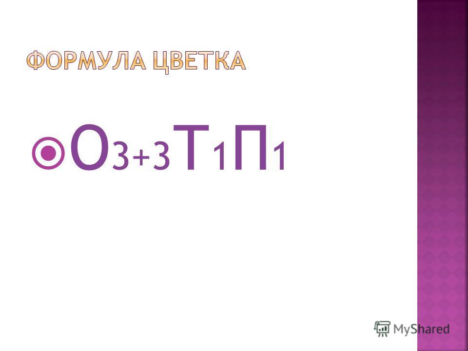 О 3+3 Т 1 П 1