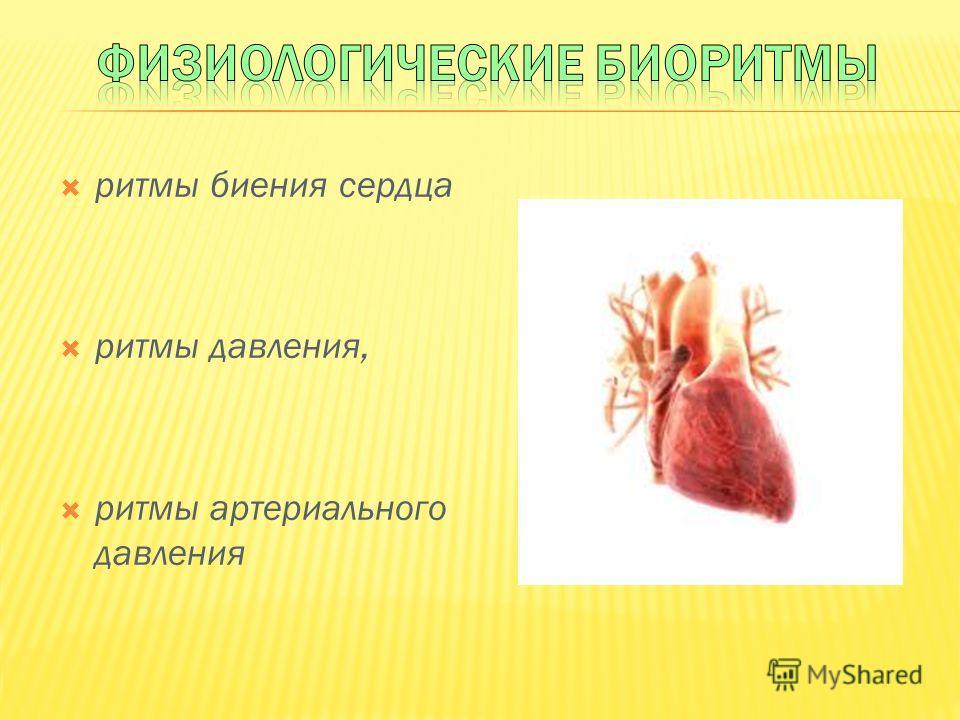 ритмы биения сердца ритмы давления, ритмы артериального давления