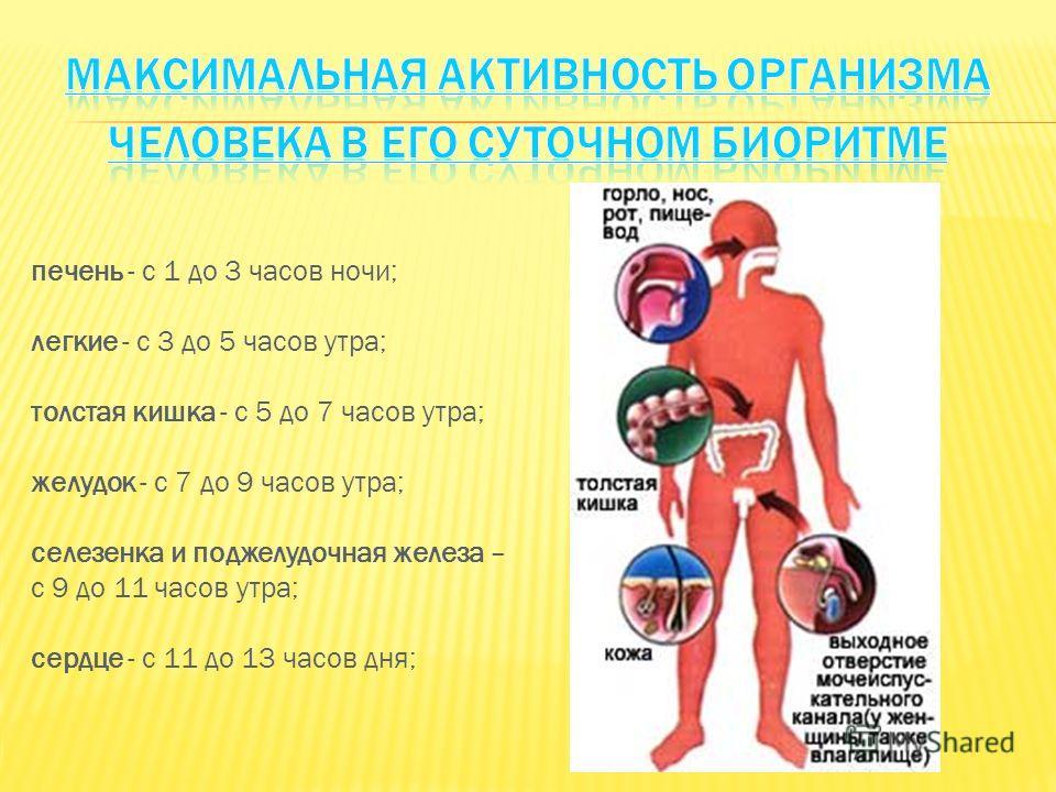 печень - с 1 до 3 часов ночи; легкие - с 3 до 5 часов утра; толстая кишка - с 5 до 7 часов утра; желудок - с 7 до 9 часов утра; селезенка и поджелудочная железа – с 9 до 11 часов утра; сердце - с 11 до 13 часов дня;
