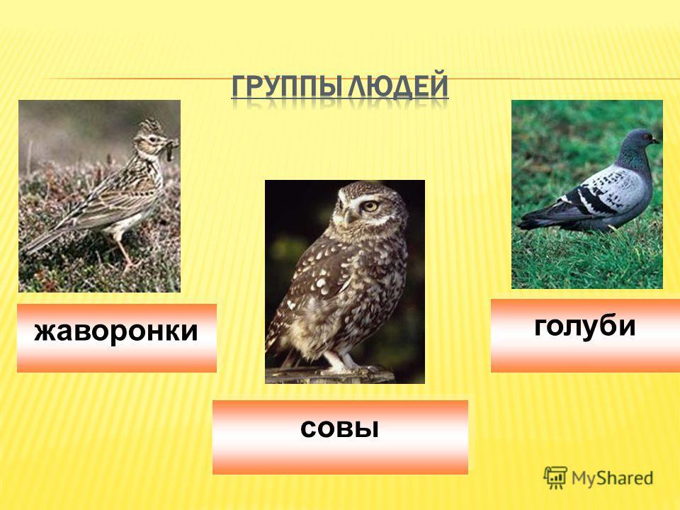 голуби совы жаворонки