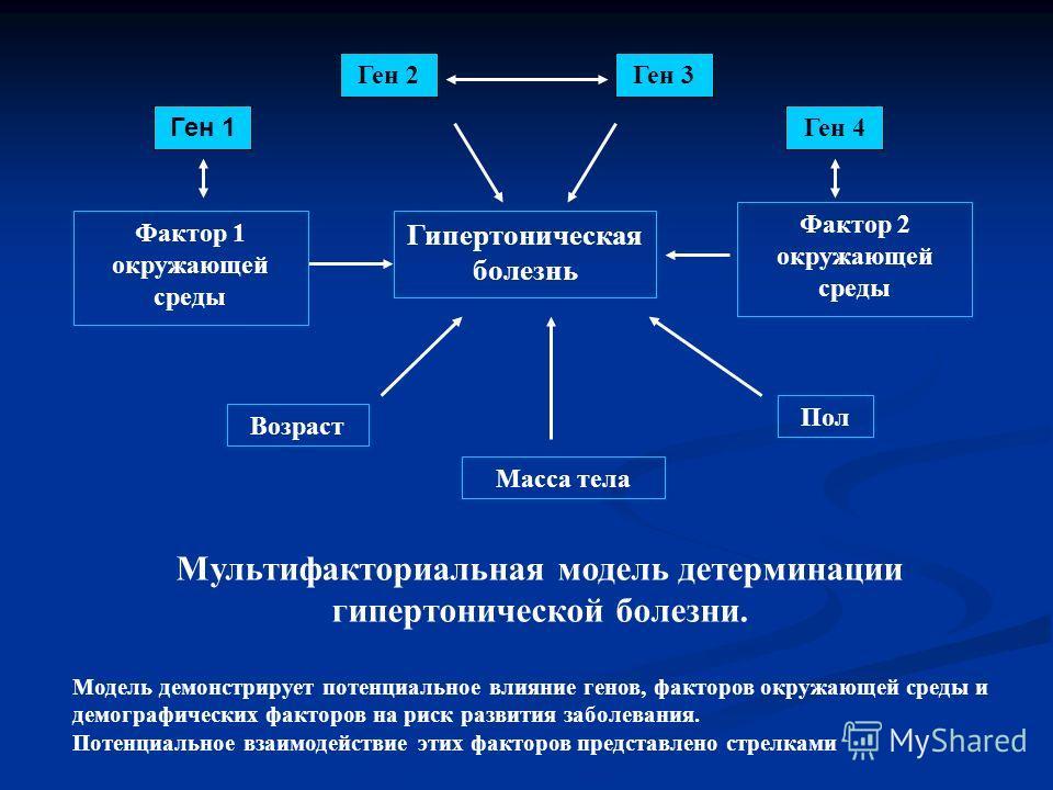Ген 3 Гипертоническая болезнь Возраст Фактор 2 окружающей среды Пол Масса тела Ген 1 Ген 4 Фактор 1 окружающей среды Ген 2 Мультифакториальная модель детерминации гипертонической болезни. Модель демонстрирует потенциальное влияние генов, факторов окр