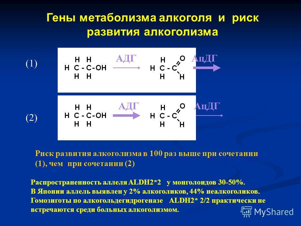 Гены метаболизма алкоголя и риск развития алкоголизма АДГ АцДГ Распространенность аллеля ALDH2*2 у монголоидов 30-50%. В Японии аллель выявлен у 2% алкоголиков, 44% неалкоголиков. Гомозиготы по алкогольдегидрогеназе ALDH2* 2/2 практически не встречаю