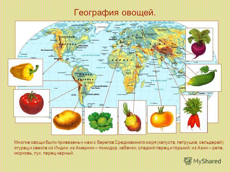 География овощей. Многие овощи были привезены к нам с берегов Средиземного моря (капуста, петрушка, сельдерей); огурец и свекла из Индии; из Америки – помидор, кабачок, сладкий перец и горький; из Азии – репа, морковь, лук, перец черный.