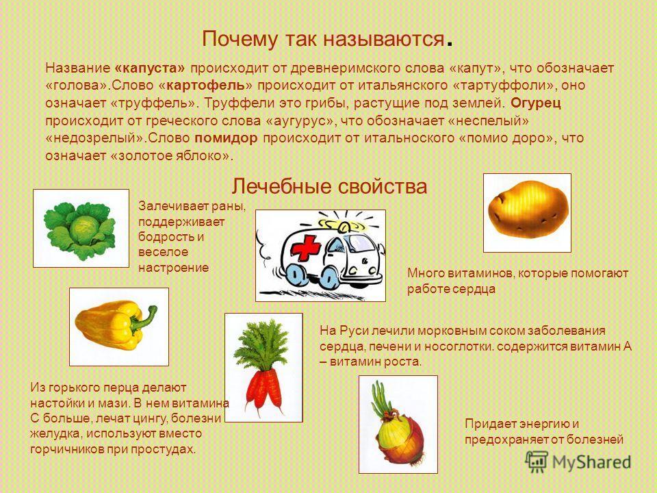Почему так называются. Название «капуста» происходит от древнеримского слова «капут», что обозначает «голова».Слово «картофель» происходит от итальянского «тартуффоли», оно означает «труффель». Труффели это грибы, растущие под землей. Огурец происход