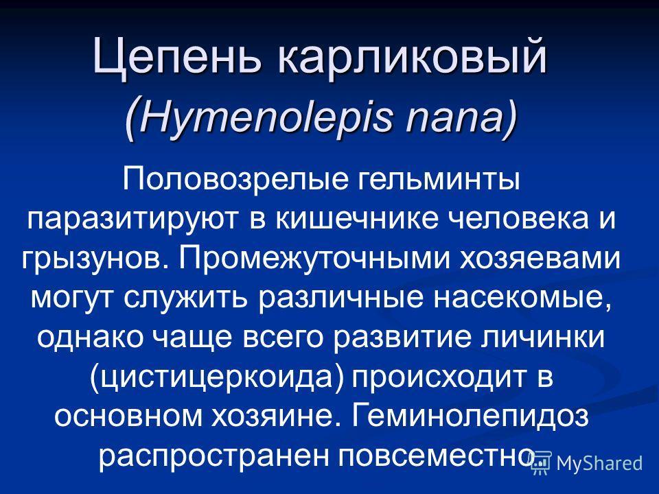 Цепень карликовый ( Hymenolepis nana) Половозрелые гельминты паразитируют в кишечнике человека и грызунов. Промежуточными хозяевами могут служить различные насекомые, однако чаще всего развитие личинки (цистицеркоида) происходит в основном хозяине. Г