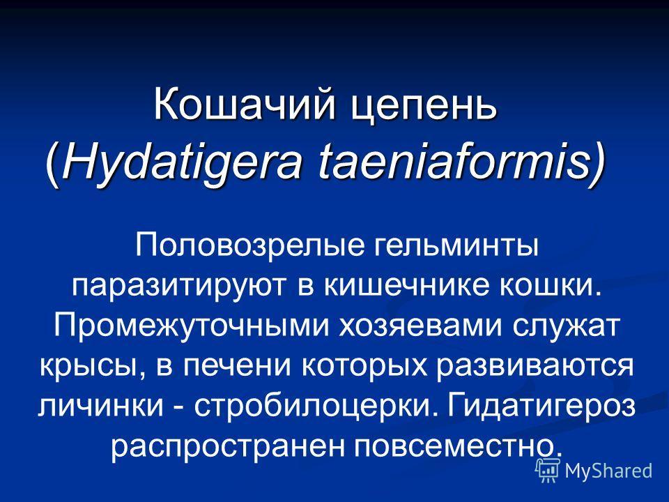 Кошачий цепень (Hydatigera taeniaformis) Половозрелые гельминты паразитируют в кишечнике кошки. Промежуточными хозяевами служат крысы, в печени которых развиваются личинки - стробилоцерки. Гидатигероз распространен повсеместно.