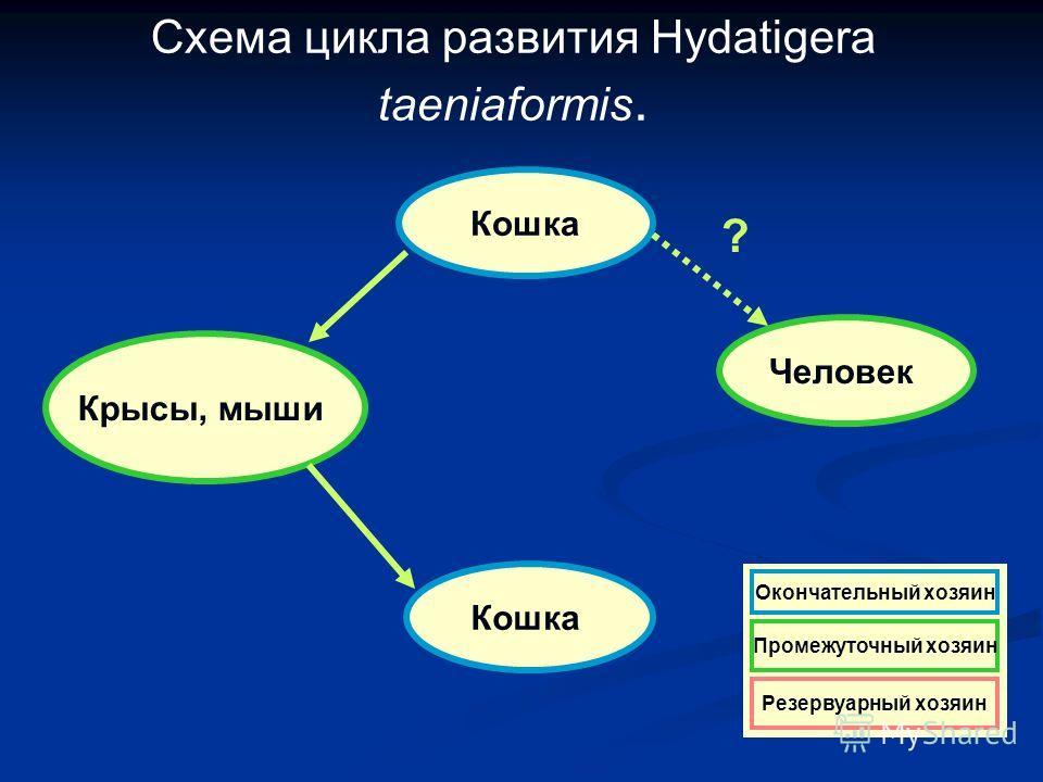Схема цикла развития Hydatigera taeniaformis. Кошка Крысы, мыши Кошка Человек ? Резервуарный хозяин Окончательный хозяин Промежуточный хозяин Резервуарный хозяин Окончательный хозяин Промежуточный хозяин Резервуарный хозяин Окончательный хозяин Проме