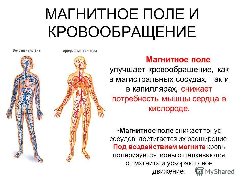 МАГНИТНОЕ ПОЛЕ И КРОВООБРАЩЕНИЕ Магнитное поле улучшает кровообращение, как в магистральных сосудах, так и в капиллярах, снижает потребность мышцы сердца в кислороде. Магнитное поле снижает тонус сосудов, достигается их расширение. Под воздействием м
