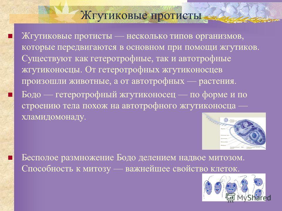 Жгутиковые протисты Жгутиковые протисты несколько типов организмов, которые передвигаются в основном при помощи жгутиков. Существуют как гетеротрофные, так и автотрофные жгутиконосцы. От гетеротрофных жгутиконосцев произошли животные, а от автотрофны