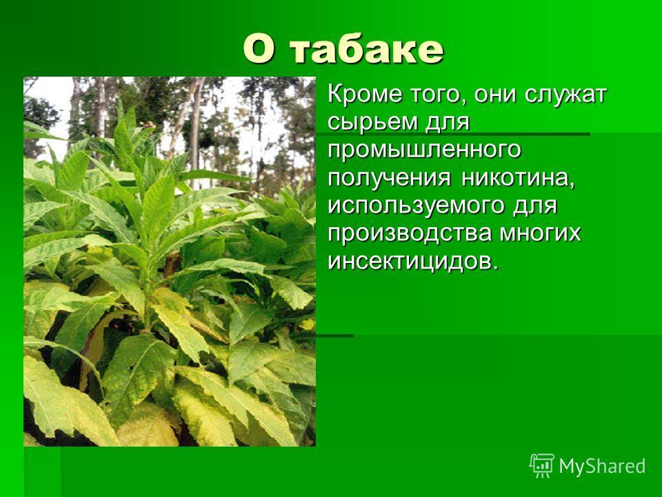 О табаке О табаке Кроме того, они служат сырьем для промышленного получения никотина, используемого для производства многих инсектицидов.