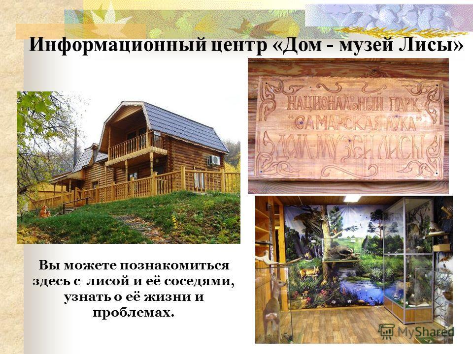 Информационный центр «Дом - музей Лисы» Вы можете познакомиться здесь с лисой и её соседями, узнать о её жизни и проблемах.