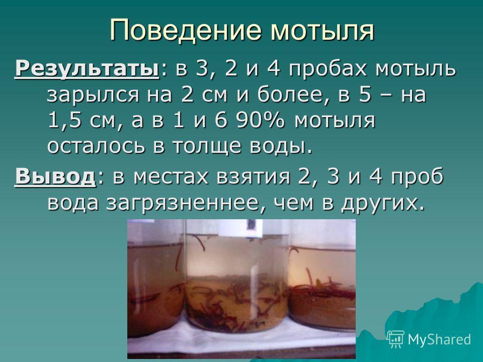 Поведение мотыля Результаты: в 3, 2 и 4 пробах мотыль зарылся на 2 см и более, в 5 – на 1,5 см, а в 1 и 6 90% мотыля осталось в толще воды. Вывод: в местах взятия 2, 3 и 4 проб вода загрязненнее, чем в других.