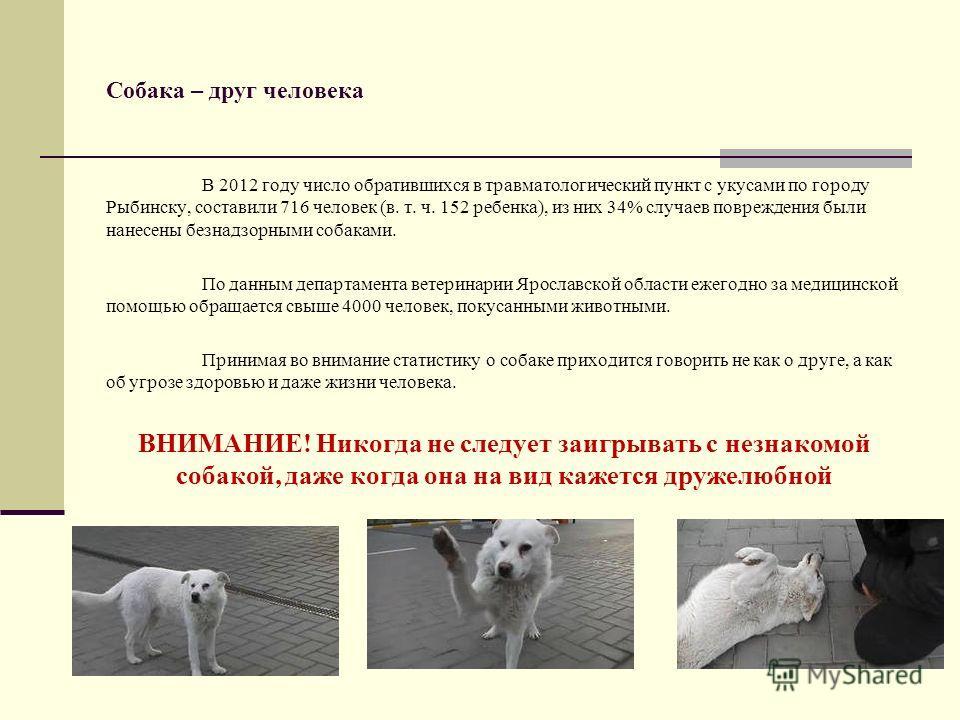 Собака – друг человека В 2012 году число обратившихся в травматологический пункт с укусами по городу Рыбинску, составили 716 человек (в. т. ч. 152 ребенка), из них 34% случаев повреждения были нанесены безнадзорными собаками. По данным департамента в
