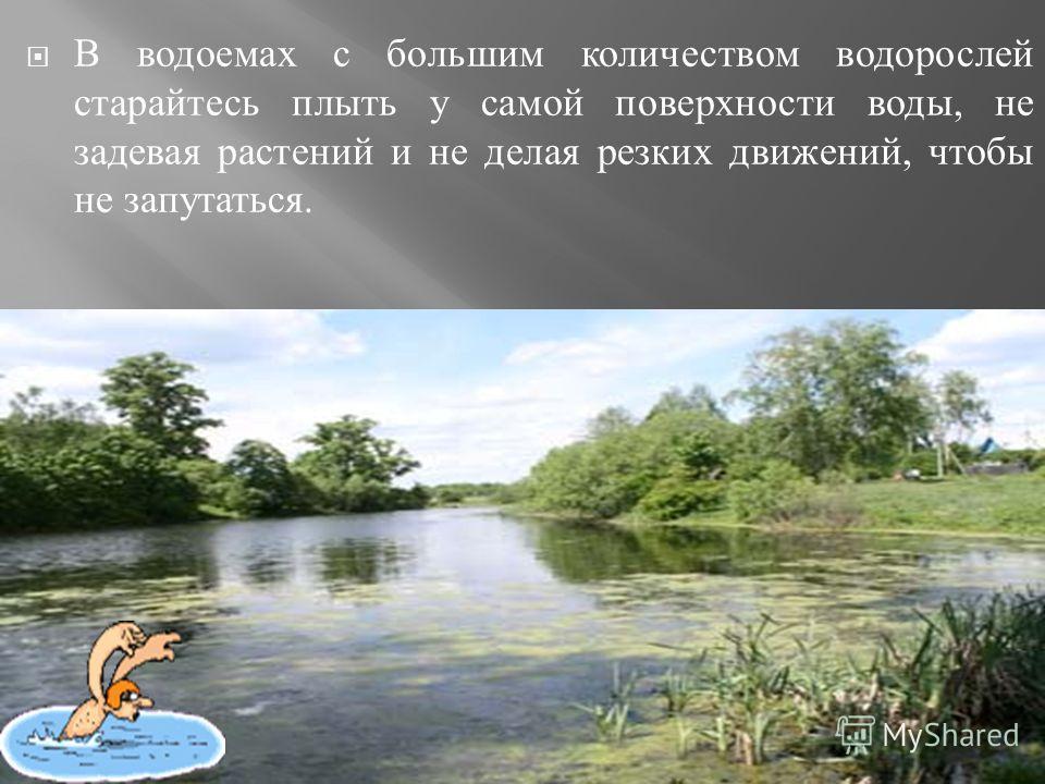 В водоемах с большим количеством водорослей старайтесь плыть у самой поверхности воды, не задевая растений и не делая резких движений, чтобы не запутаться.