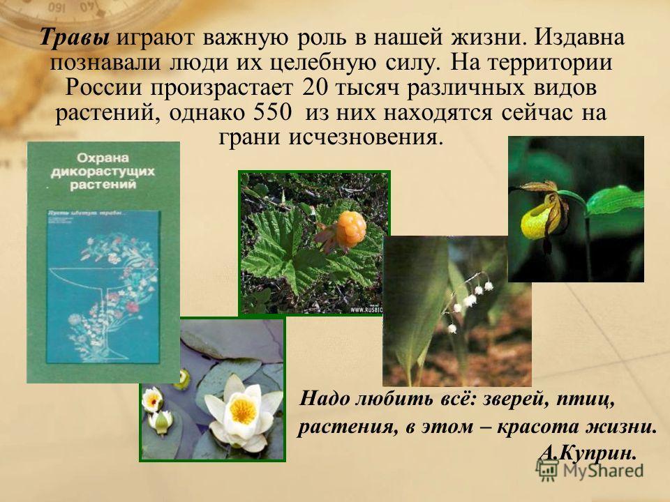 Травы играют важную роль в нашей жизни. Издавна познавали люди их целебную силу. На территории России произрастает 20 тысяч различных видов растений, однако 550 из них находятся сейчас на грани исчезновения. Надо любить всё: зверей, птиц, растения, в