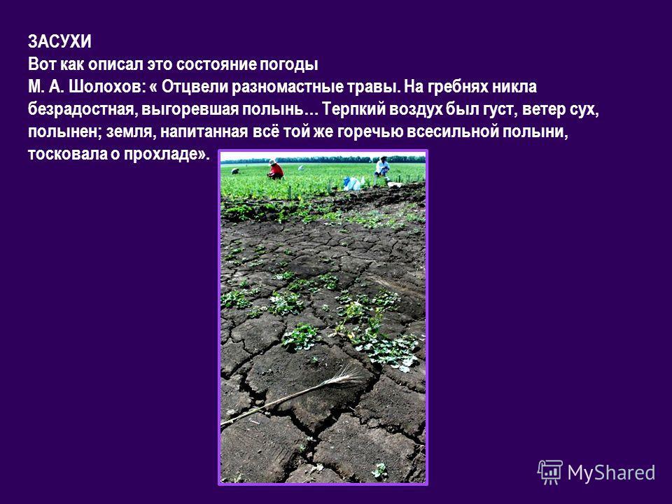 ЗАСУХИ Вот как описал это состояние погоды М. А. Шолохов: « Отцвели разномастные травы. На гребнях никла безрадостная, выгоревшая полынь… Терпкий воздух был густ, ветер сух, полынен; земля, напитанная всё той же горечью всесильной полыни, тосковала о