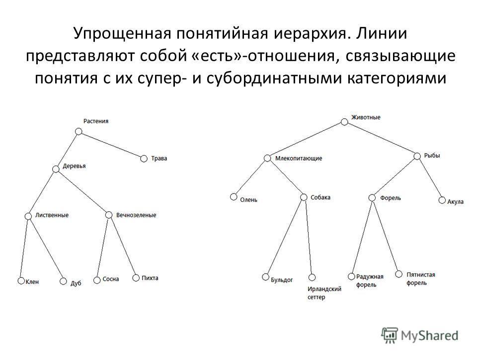 Упрощенная понятийная иерархия. Линии представляют собой «есть»-отношения, связывающие понятия с их супер- и субординатными категориями