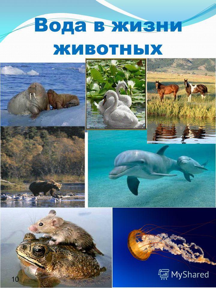 Вода в жизни животных 10