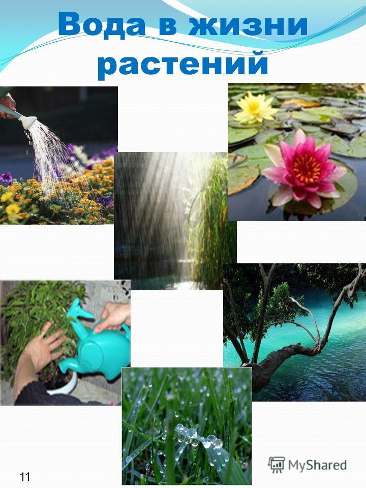 Вода в жизни растений 11