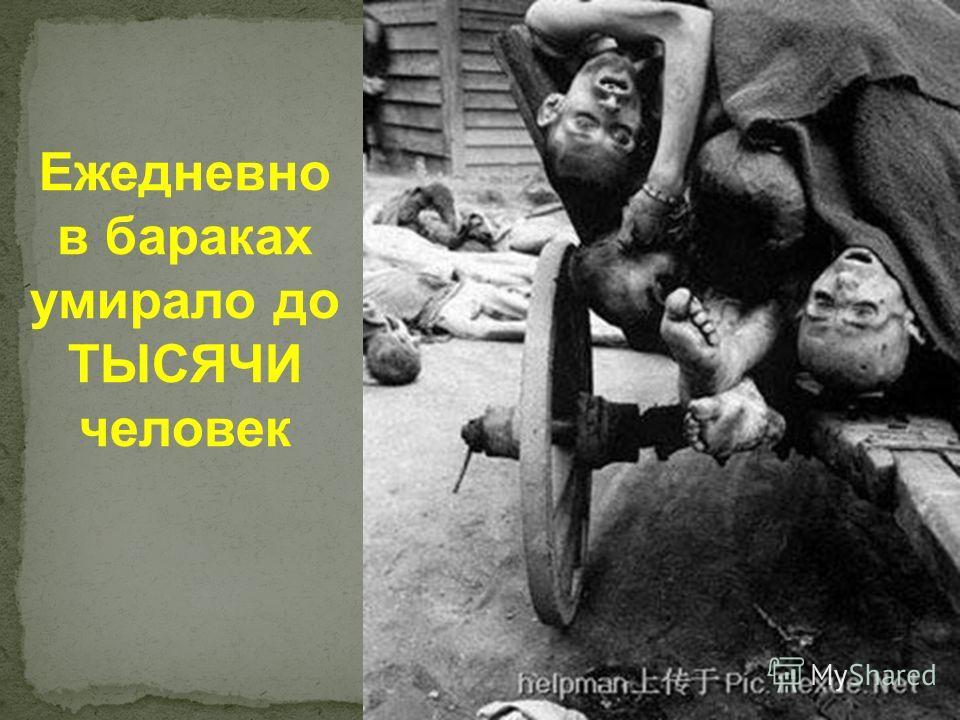 Ежедневно в бараках умирало до ТЫСЯЧИ человек