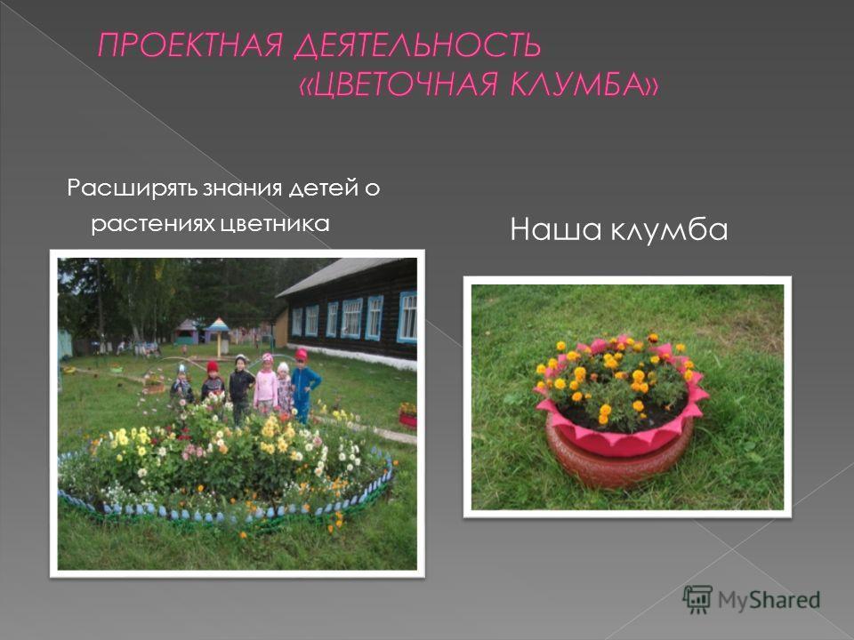 Расширять знания детей о растениях цветника Наша клумба