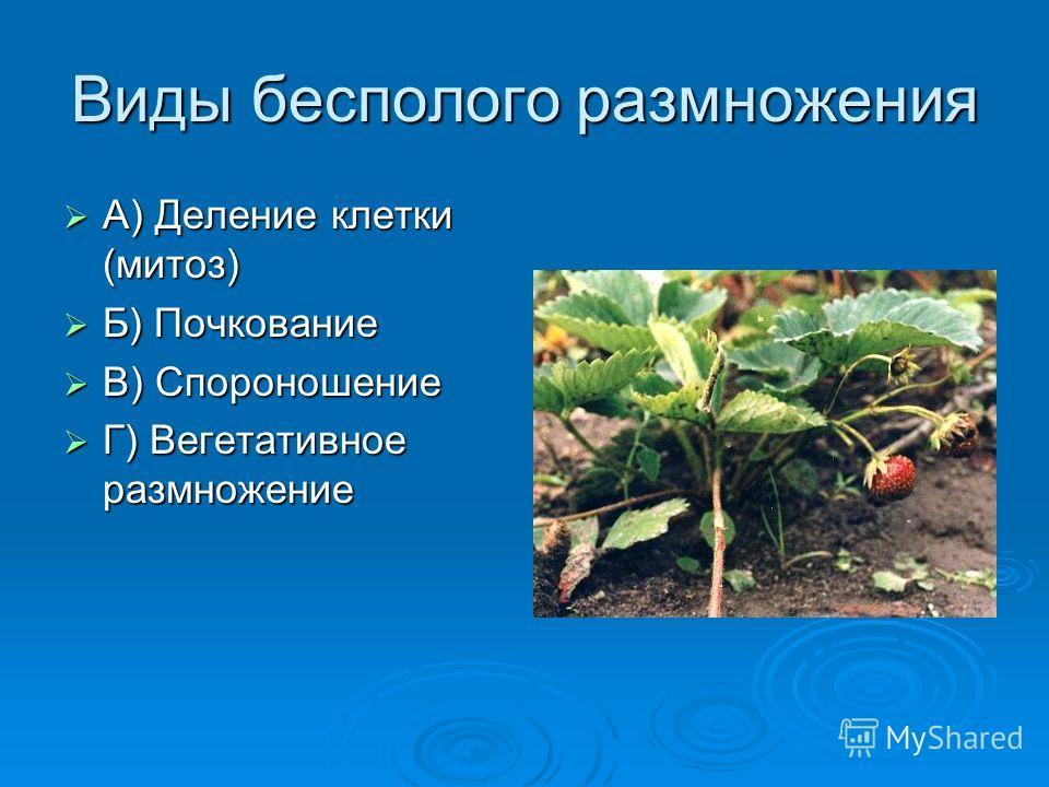 Виды бесполого размножения А) Деление клетки (митоз) А) Деление клетки (митоз) Б) Почкование Б) Почкование В) Спороношение В) Спороношение Г) Вегетативное размножение Г) Вегетативное размножение